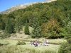 brame-cerf-pyrenees10