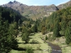 brame-cerf-pyrenees11