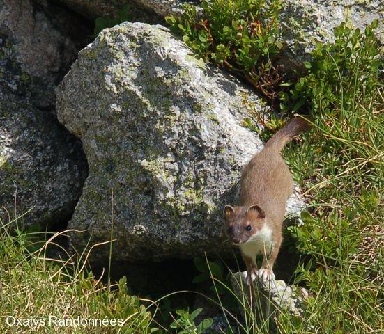 ecotourisme-faune