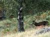 Vacances famille ecogite faune