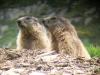 ecogite Vacances famille marmottes