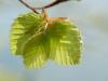 Rando-printemps-panorama