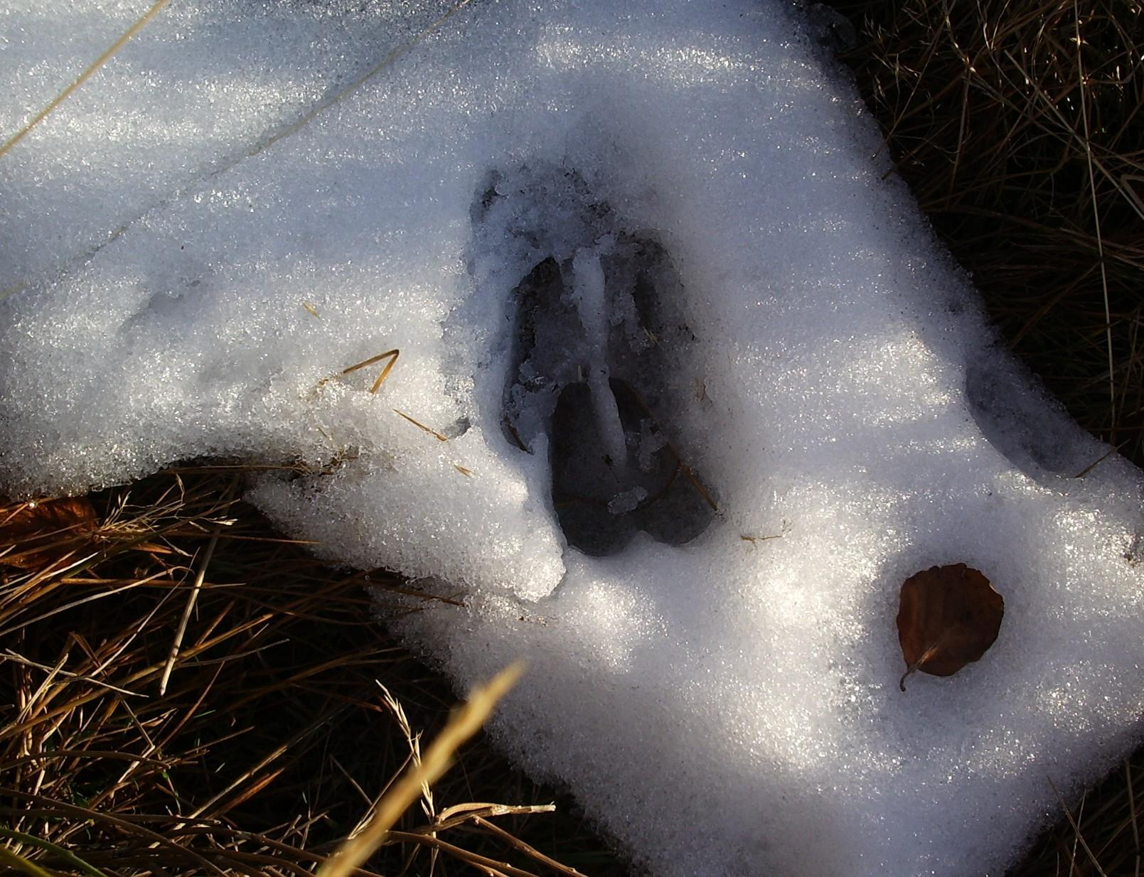 rando-traces-de-mouflon