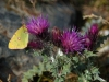 voyage-scientifique-pyrenees-cnrs-biodiversite1