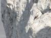 grande faune raquettes pyreneesTichodrome echelette