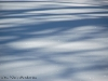 raquette hiver faune pyrenees neige