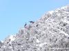 week-end- neige- raquettes-faune-1